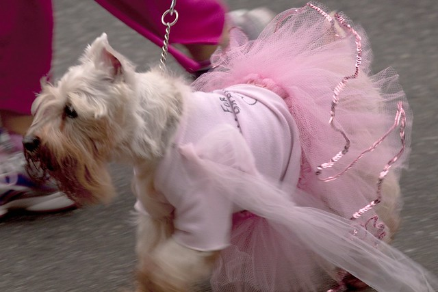 run for the cure dog