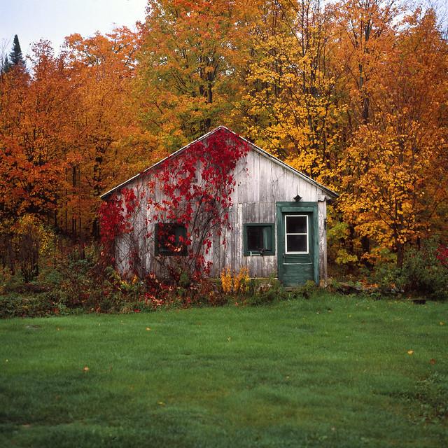 Le poulailler en automne