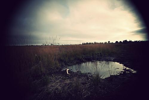 autumn landscape denmark puddle wideangle autumncolours danmark 2010 efterår extremevignette svanemosen canoneos5dmrkii theswanbog sigma1020mmonafullframecamera