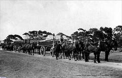 Horse Teams carting water pipes