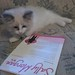 This cat is a fan of my newsletter, so sweet!