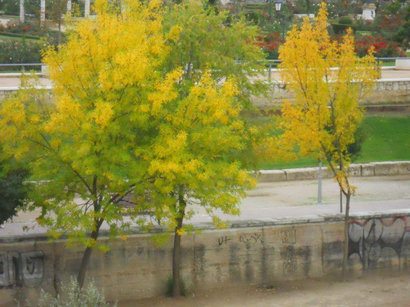 Árboles en otoño 8