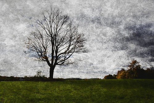 morning tree fall texture field october durham cloudy connecticut ct barren middlefield giantonio kgiantonio kengiantonio