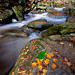 Fall Stream by Ryan Gardiner