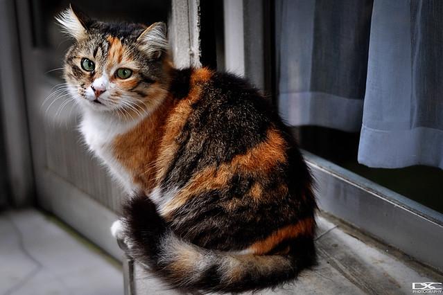 Dark Tabby Catblack Cat Blue Eyes