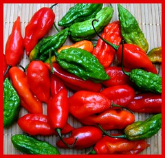 bell pepper(0.0), plant(0.0), cayenne pepper(1.0), chili pepper(1.0), vegetable(1.0), red bell pepper(1.0), serrano pepper(1.0), tabasco pepper(1.0), peppers(1.0), bell peppers and chili peppers(1.0), italian sweet pepper(1.0), bird's eye chili(1.0), peperoncini(1.0), produce(1.0), food(1.0), pimiento(1.0), malagueta pepper(1.0), jalapeã±o(1.0), habanero chili(1.0),