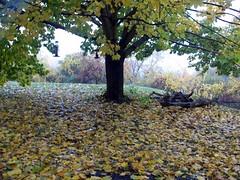 Foliage_102810c