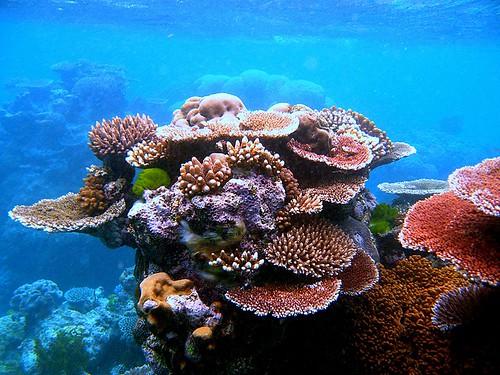 大堡礁為世界上最大、保存最好的珊瑚礁群。(圖片轉載自聯合國報告)