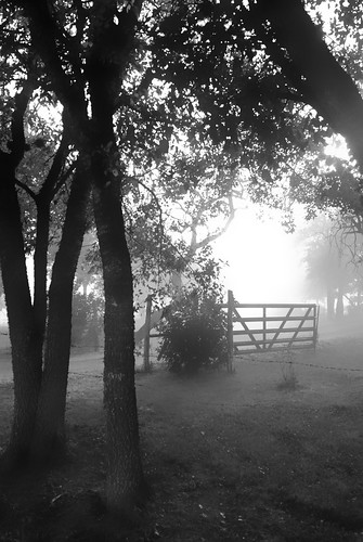 morning fog photo walk