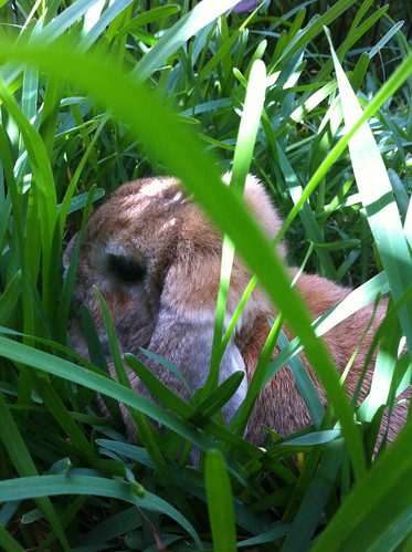 Pancake in the Tall Grass