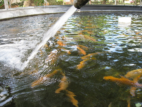 Is there anyone in san antonio texas or in surrounding for Fish farms in texas