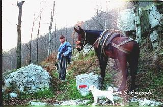 Novi Velia (SA), 1989, Pellegrinaggio e festa al Santuario della Madonna del Sacro Monte o Madonna di Novi Velia.
