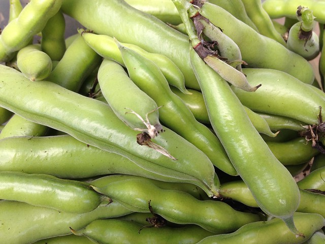 Tendrils: Broad bean pods