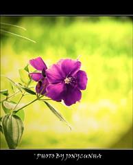 A FLOR E A NÁUSEA - The Flower and Nausea