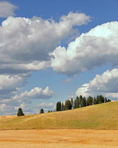 washington spokane bluesky wheatfields latesummer fluffyclouds sunnysky bigelowgulchroad