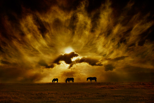sky horses cloud sunrise equine