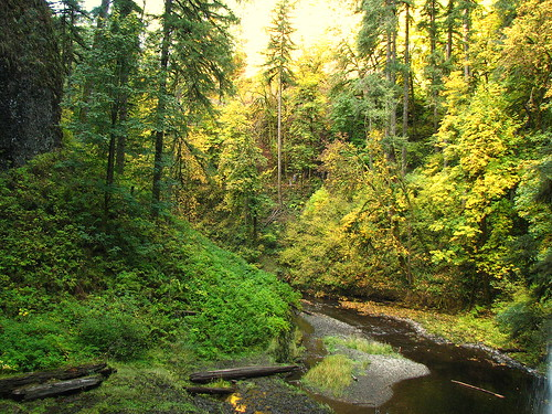 David Berry's photo of Silver Creek, along the Trail of Ten Falls at Silver Falls State Park.