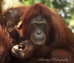 Motherly Love  (DSC_0095)