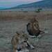 マサイマラ国立公園