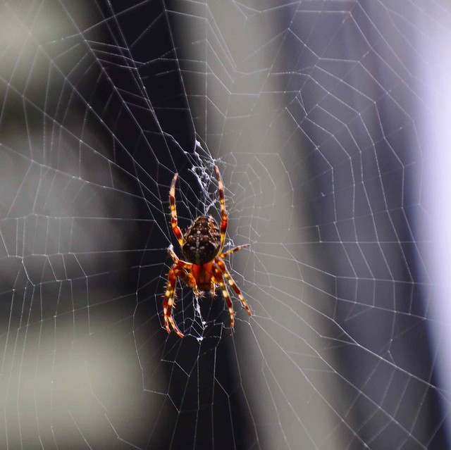 Layers of Light ~ His Web