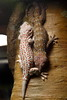 "<a href=""http://www.flickr.com/photos/mr_t_in_dc/5034476763/"">Photo of Gekko gecko by Mr. T in DC</a>"
