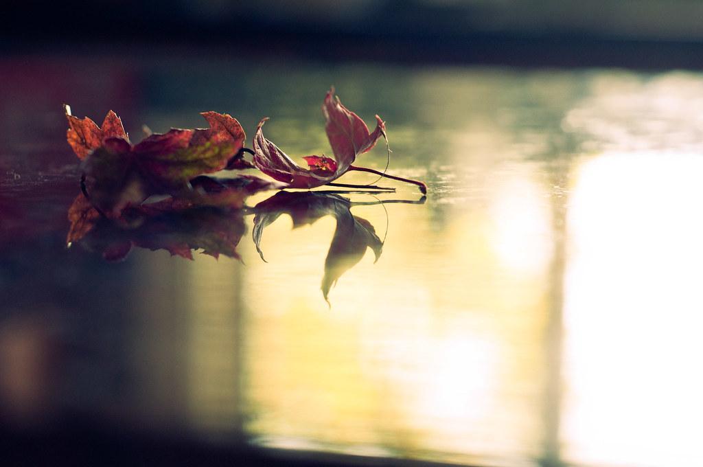 Bringing a little Autumn in...