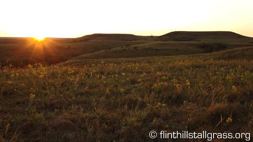 sunrise konza tallgrassprairie