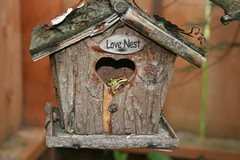 branch, wood, birdhouse, fauna,