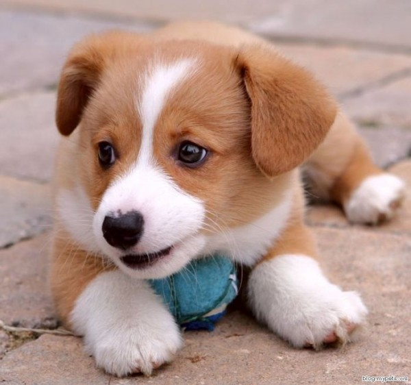 Cute Little Puppy Dogs Puppies Your Online Guide To Dog Flickr