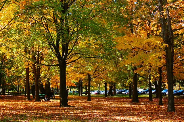 Autumn in High Park, Toronto Canada.