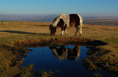 Early morning on Sharpitor - Dartmoor National Park