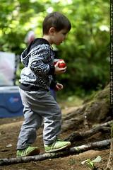 sequoia having an apple