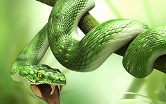 animal, serpent, western green mamba, snake, reptile, organism, green, fauna, close-up, scaled reptile,