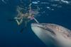 Marieke whale shark nanny