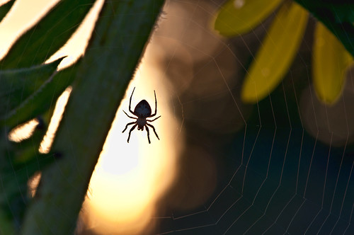 255/365: Hanging out with a spider