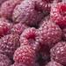 raspberries close by Muffet