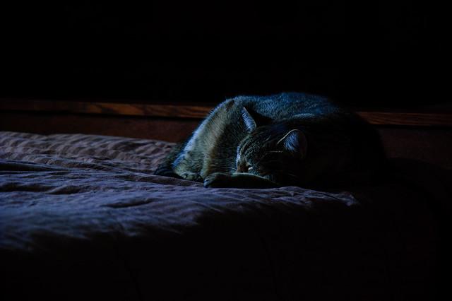 Blue Monday - pet portrait of my cat, Marie