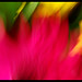 pinceles de luz flor2