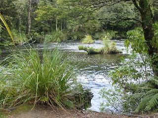 Downstream from Papakorito Falls - Lake Waikaremoana Great Walk