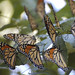 Butterflies_2010-10-01-03-48-42