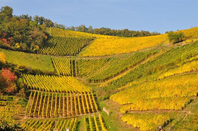 DNA, Dernières nouvelles d'Alsace ~ Last news from Alsace | Flickr ...