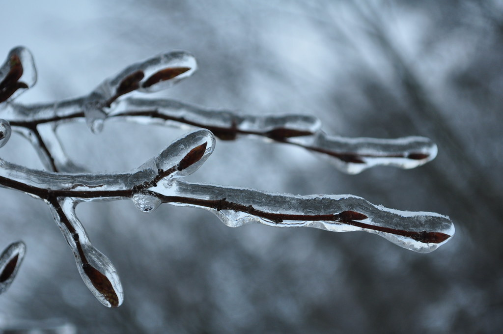 icy_1
