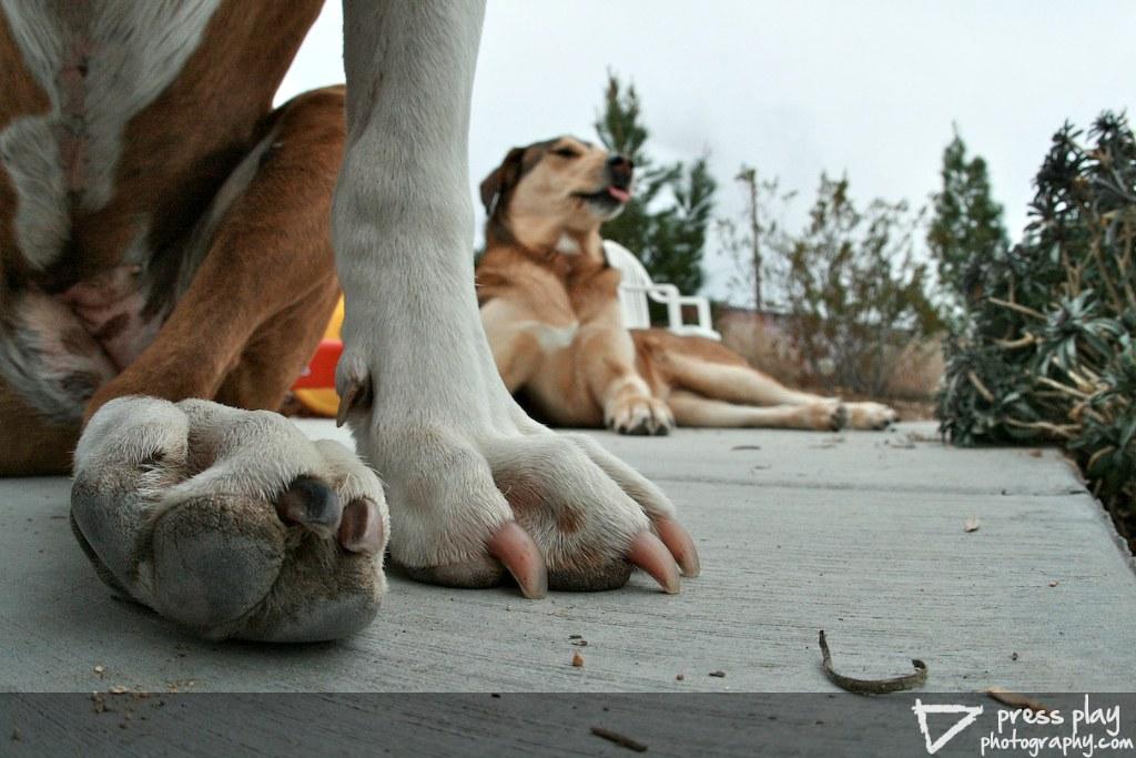 Puppy Portrait - Paws