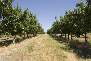 IPM is a system of farming designed to be sustainable, it involves using a combination of cultural, biological and chemical measures, including plant biotechnology.