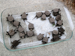 Bauer's Rescued Turtles