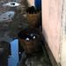 Drainase buruk menimbulkan genangan air. : Poor drainage causes standing water.  Photo by Ardian