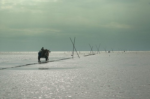 《濕地法》上路後,可望解決濕地無端遭受開發破壞,又能兼顧產業利用。圖為彰化海岸濕地。攝影:蔡嘉陽。