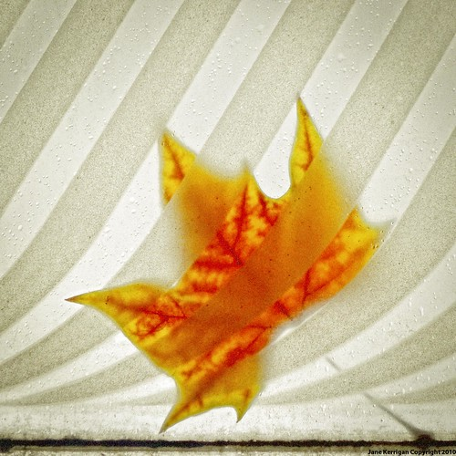 [leaf on a bus stop roof] [feuille sur le toit d'un arrêt de bus]