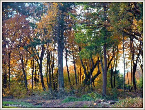 autumn trees fall forest landscape picnik