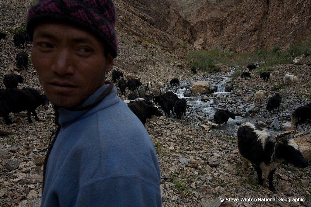 Yak Herders and putting up #2 camera trap